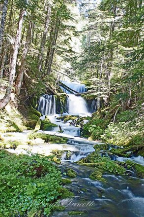 073116_38_Big Spring Creek-NF23, WA