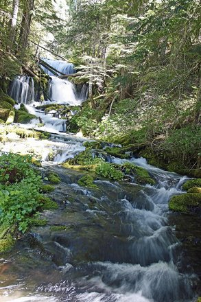 073116_42_Big Spring Creek-NF23, WA