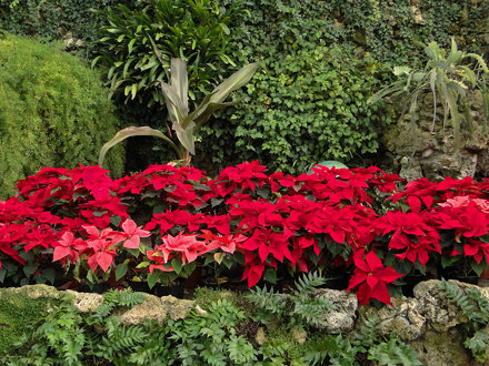Christmas at the Belle Isle Conservatory