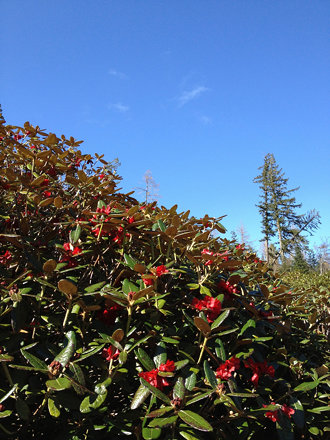 Red flowers, blue sky