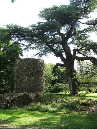 Tree and curtain wall, Blarney Castle