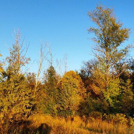 Огненные краски в #Ботаника #РГУ #ЮФУ #ростов #ростовнадону #Отдыхнаприроде #Лес #Forest #rostovnado