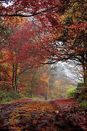 Autumn above Brancepeth