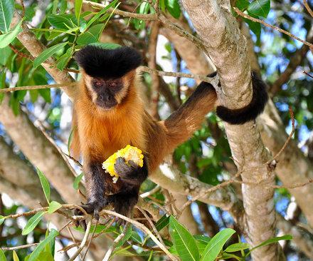 Best Monkey Haircut
