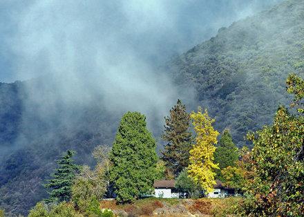Morning Mist, Oak Glen, CA 11-12