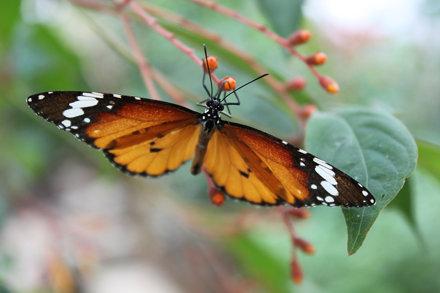 Butterfly Garden Grevenmacher