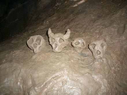 Mud Skull Family