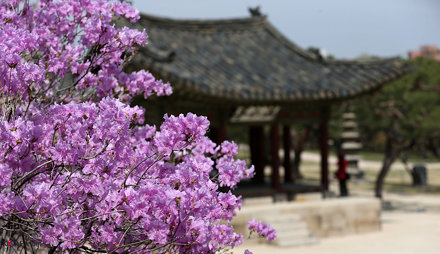 Korea_Palace_Spring_Flowers_03