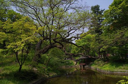 2017-04-30_12-34-31 Corée du Sud - Seoul - Changdeokgung Palace Biwon