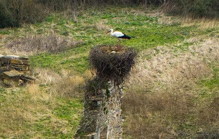 Kite fly over a Stork's nest...
