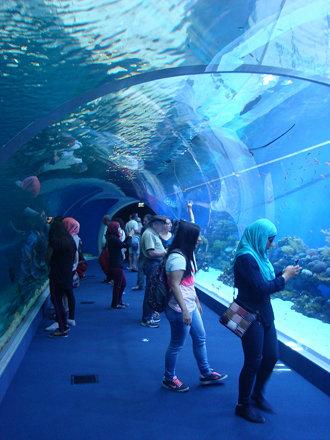 Подводный стеклянный тоннель