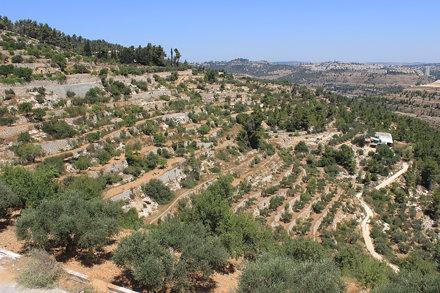 Le vigne del Monastero di Cremisan