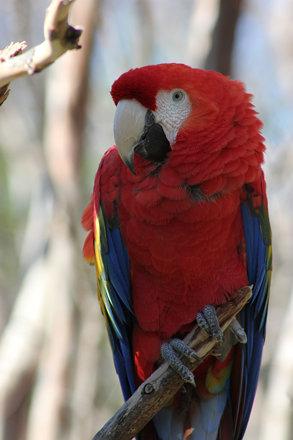 Macaw, Dallas Zoo