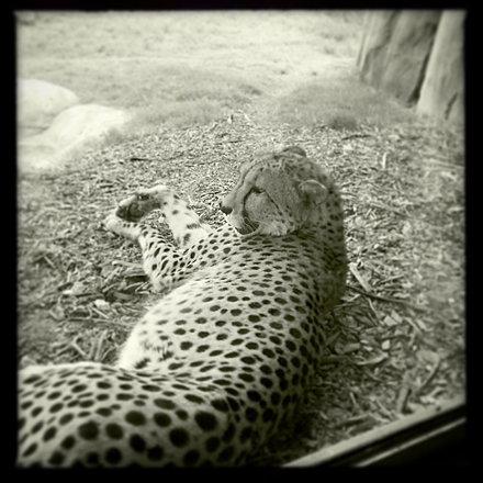 Chillin' #DallasZoo #dallaszoo #zoo