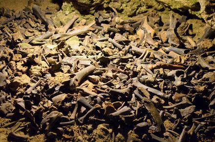 Knochen von Höhlenbären