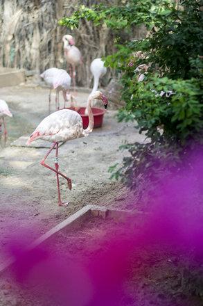 Dubai Zoo Flamingo