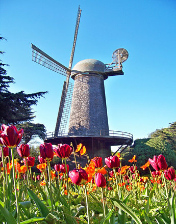 Windmill with tulips and poppies. Queen Wilhelmina Tulip Garden