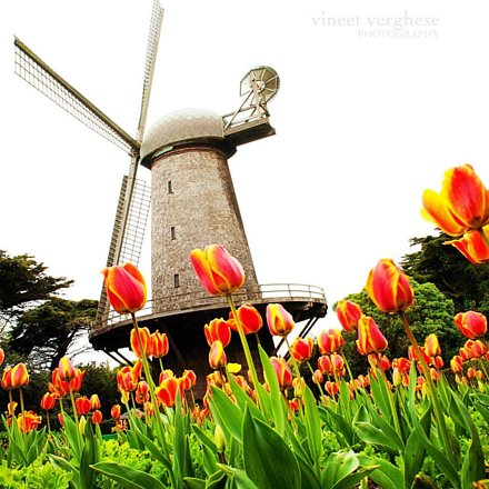 """""""When the wind of change blows, some people build walls, others build windmills."""" ~Old Chi"""