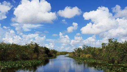 Red-shouldered Hawk, Everglades NP, FL, 1998_03_15 002.jpg