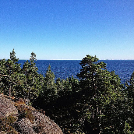 #baltic #sea #shore #water #sweden #summer #tree