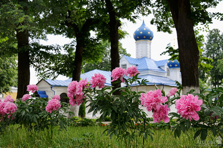 Pink Peony Flowers in St.Theodore Convent (Pereslavl-Zalessky)