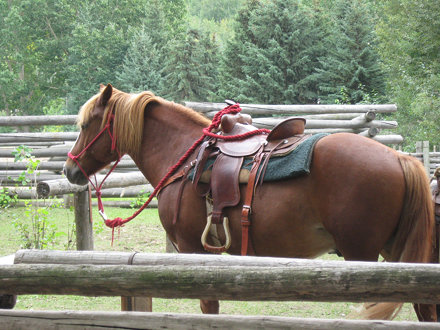 1885 Street Horse