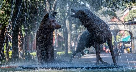 2018 - Mexico -  Mexico City - Coyoacán Place of Coyotes Fountain