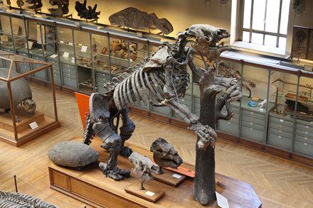 200904 - Musée d'Histoire naturelle - Paresseux géant