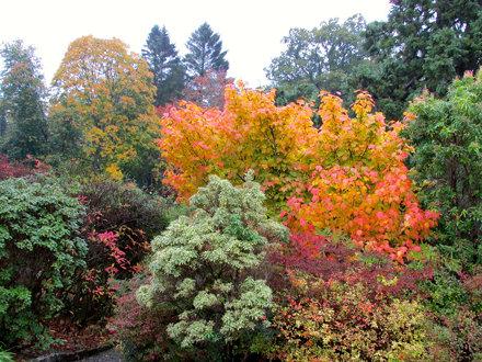 Autumn in the walled garden - Geilston Garden, Cardross, Scotland