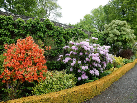 Colourful border, Geilson