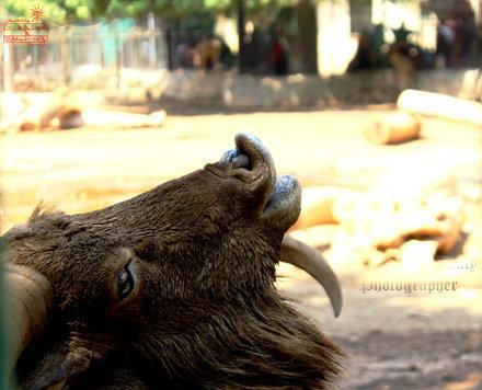 Zoo 116
