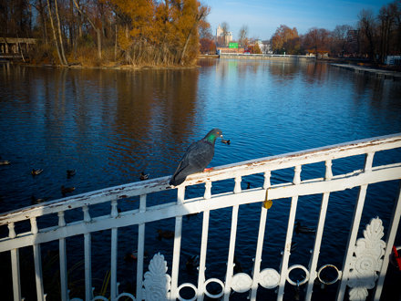 Autumn in Moscow, #30