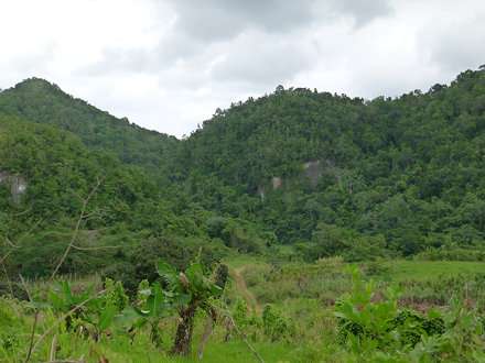 forested hills and fields, Cockpit Country, Jamaica, 2010-12-14 (1 of 2).jpg