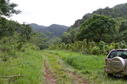 forest and fields, Cockpit Country, Jamaica, 2010-12-12 (34 of 88).jpg