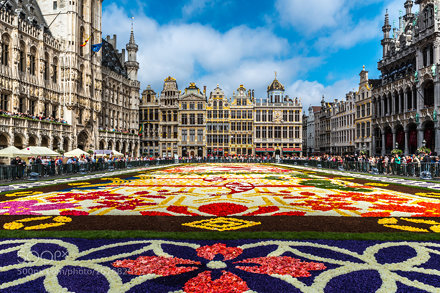 carpetflowersbxl2016