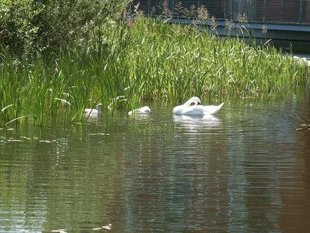 2003-07-12 065 Greenwich Peninsula Ecology Park