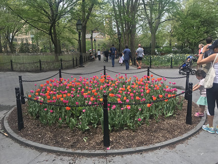 Washington Square Park in spring