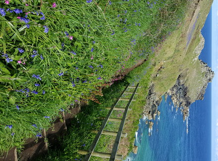 South West Coast Path: Blick auf Gurnard's Head