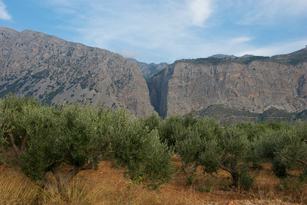 Olive trees and the Ha Gorge