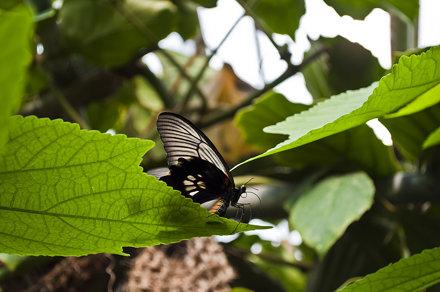 Fjärilshuset, Haga, Solna