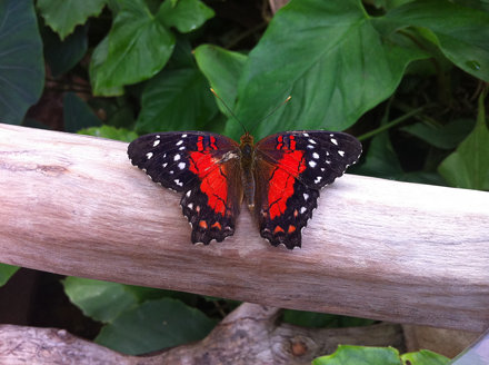Butterfly house 1