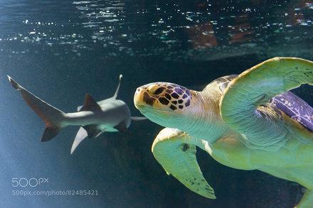 Turtle & Shark