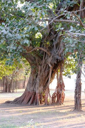 Vadodara, India ⥁