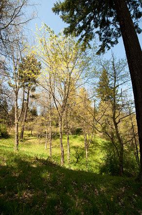 Hoyt Arboretum