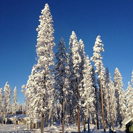 Мороз и солнце ) #игора