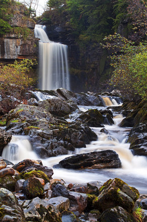 Thornton Force Cropped