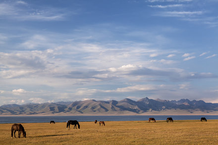 Summer pasture at Lake Son Kul