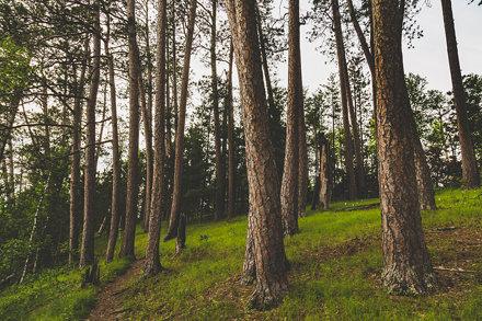 Preacher's Grove Trail - Itasca State Park, Minnesota