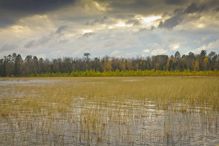 Wild Rice and Wild Clouds