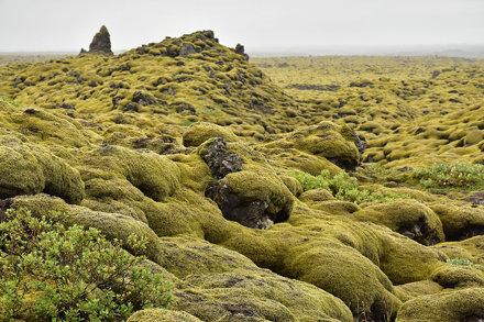 Katla Geopark - Mossy Rocks 09